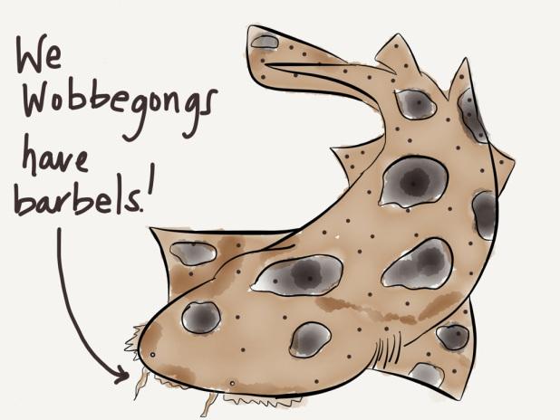 swow barbel cartoon
